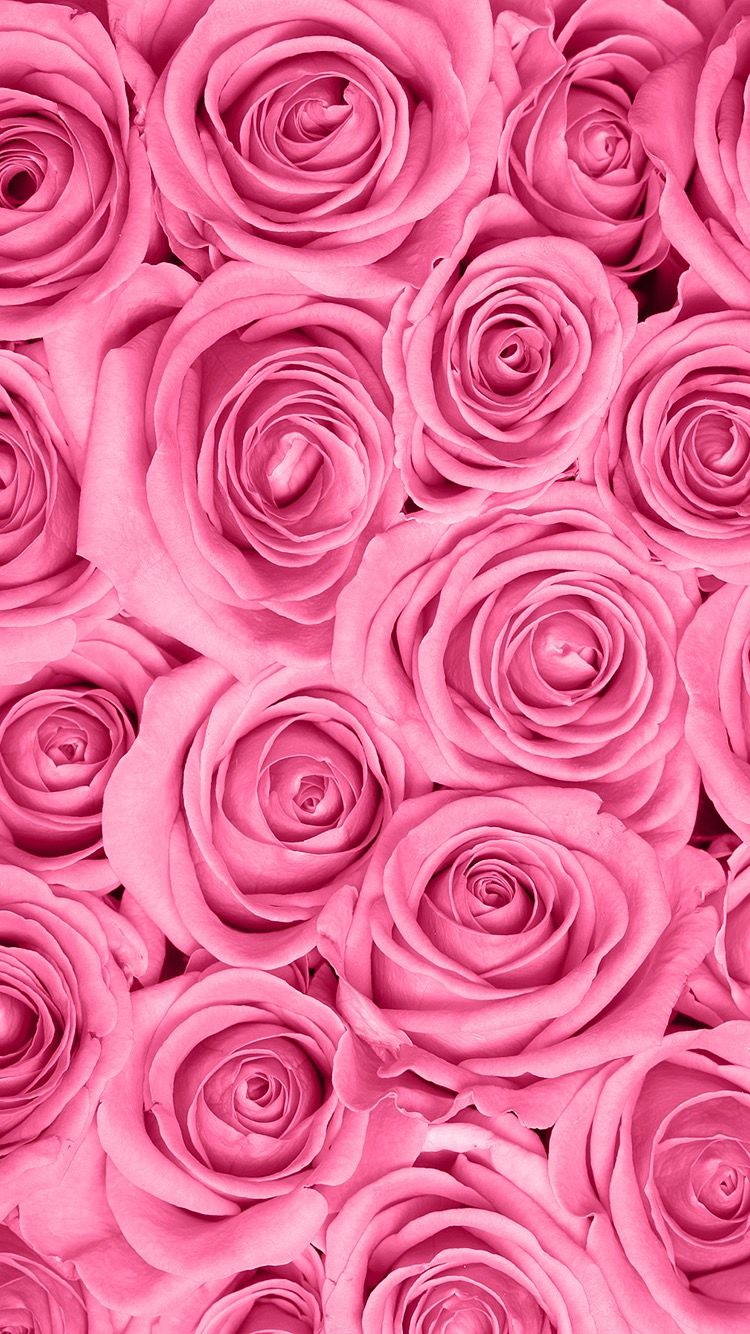 Fondos De Pantalla Fond D Ecran Iphone Fleur Photographie De Rose Fond D Ecran Telephone
