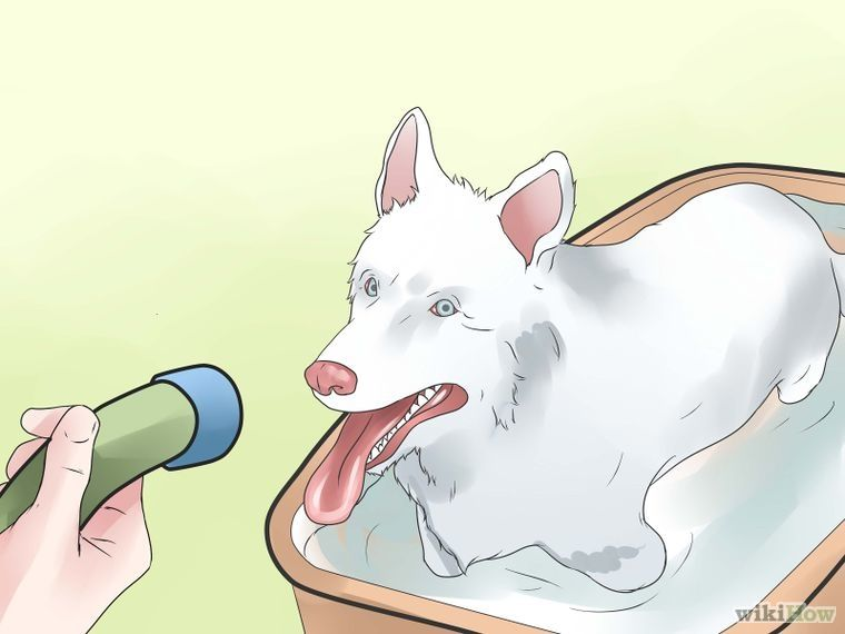 6 Ways To Make Your Dog Smell Better - Wikihow  Dog -1355