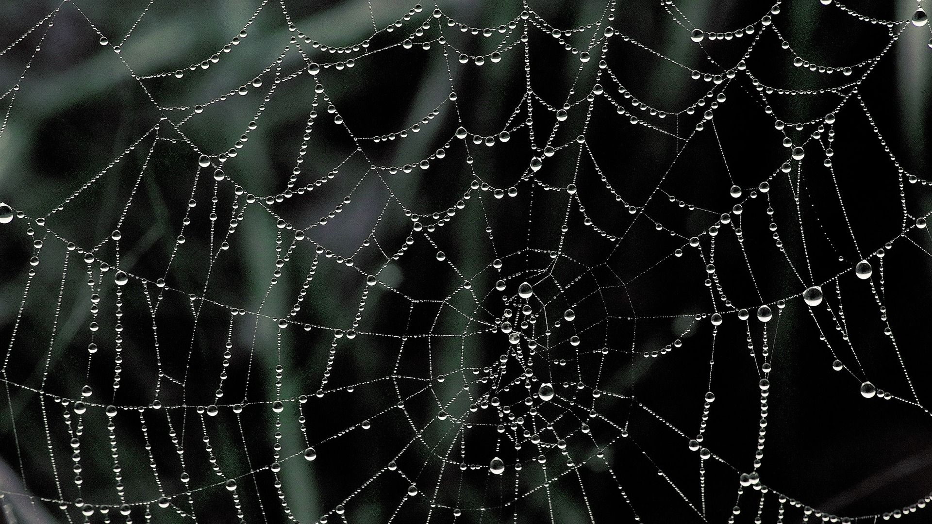 Amazing Spider Web wallpapers Wallpapers HD Wallpapers wallpapers