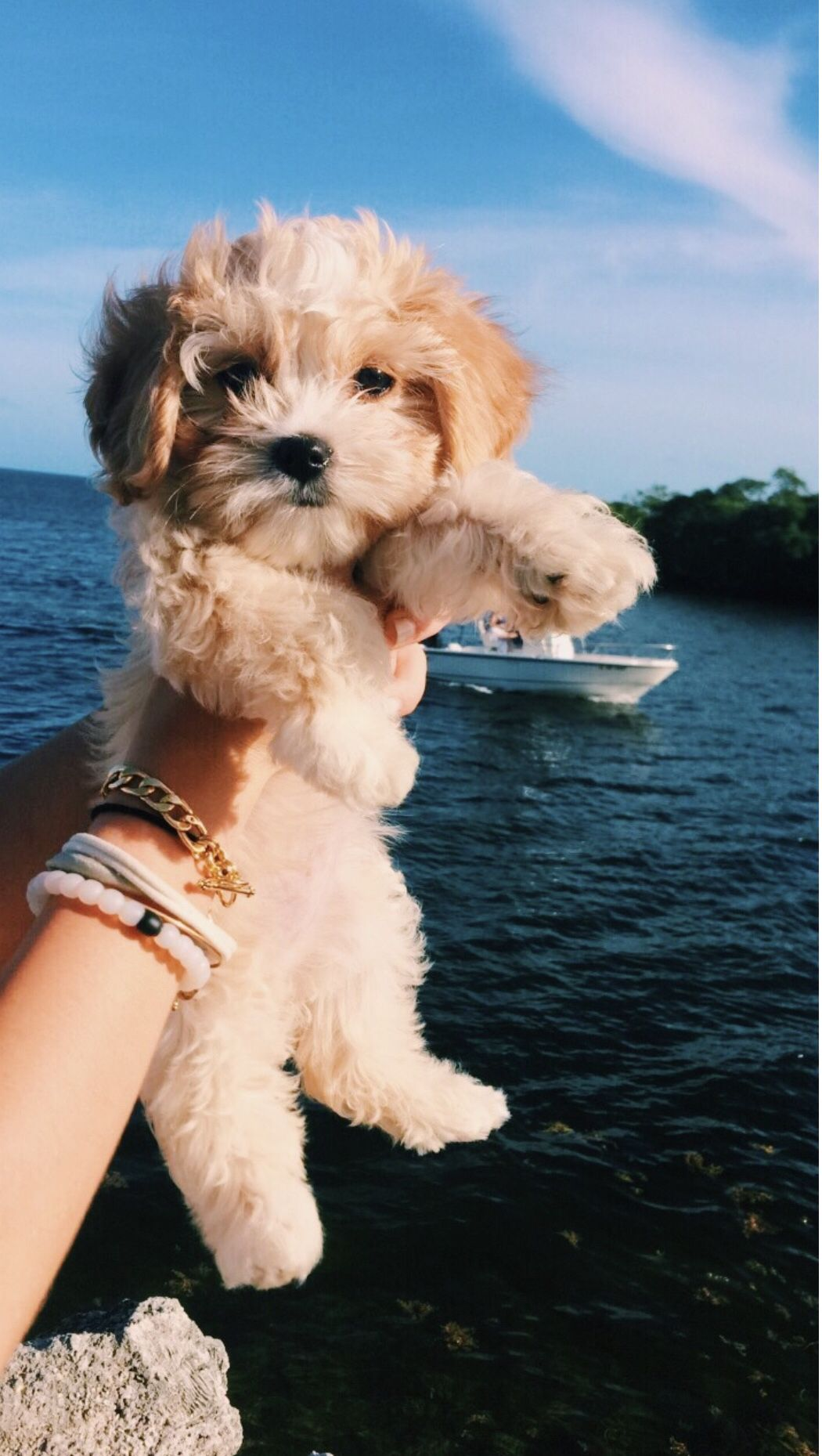 Puppy Having A Fun Time While Hanging On The Outside Of A Boat