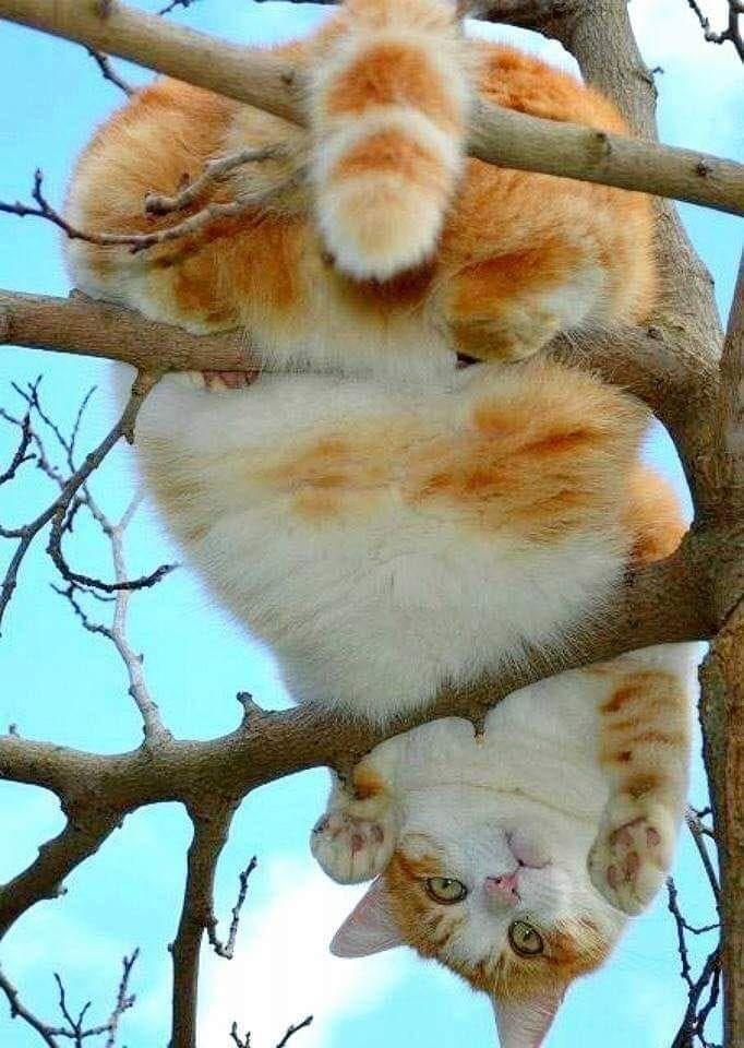 Кот к весне похудел