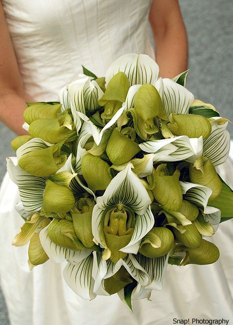 Mono-botanical bridal bouquet of green and white lady slipper orchids...ultra luxurious!