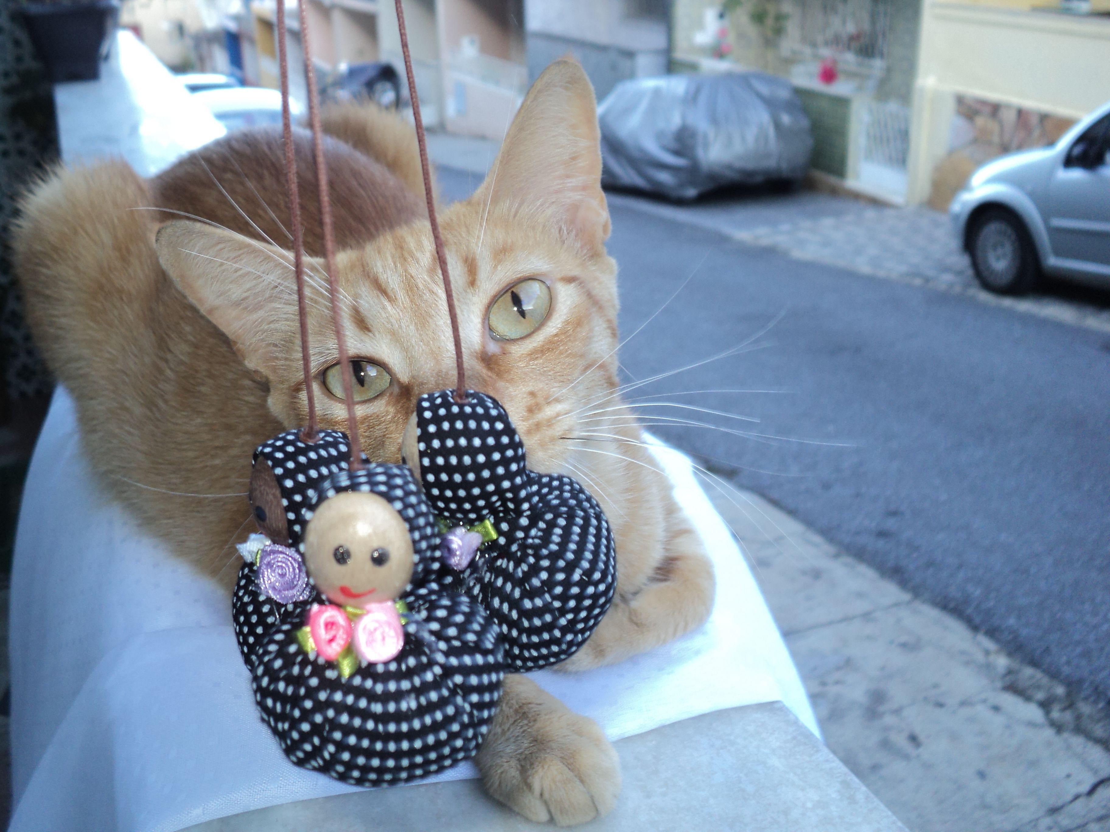 Três Marias e meu gato Curt.