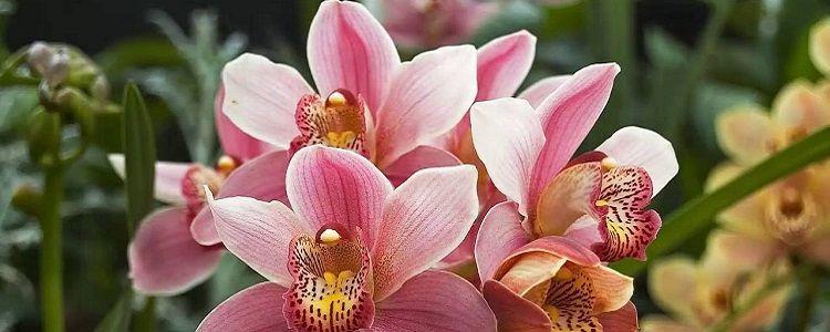 Envasando sua Orquídea - Passo-a-passo Você quer transplantar uma orquídea que está em um local fixo para um outro vaso? Outras vezes, percebemos que a orquídea está muito apertada em seu vaso, precisando ser transplantada. Aprenda aqui como!  Materiais necessários para cuidar de suas orquídeas    Tesoura de po... - http://www.ecoadubo.blog.br/ecoblog/2017/01/20/envasando-sua-orquidea/