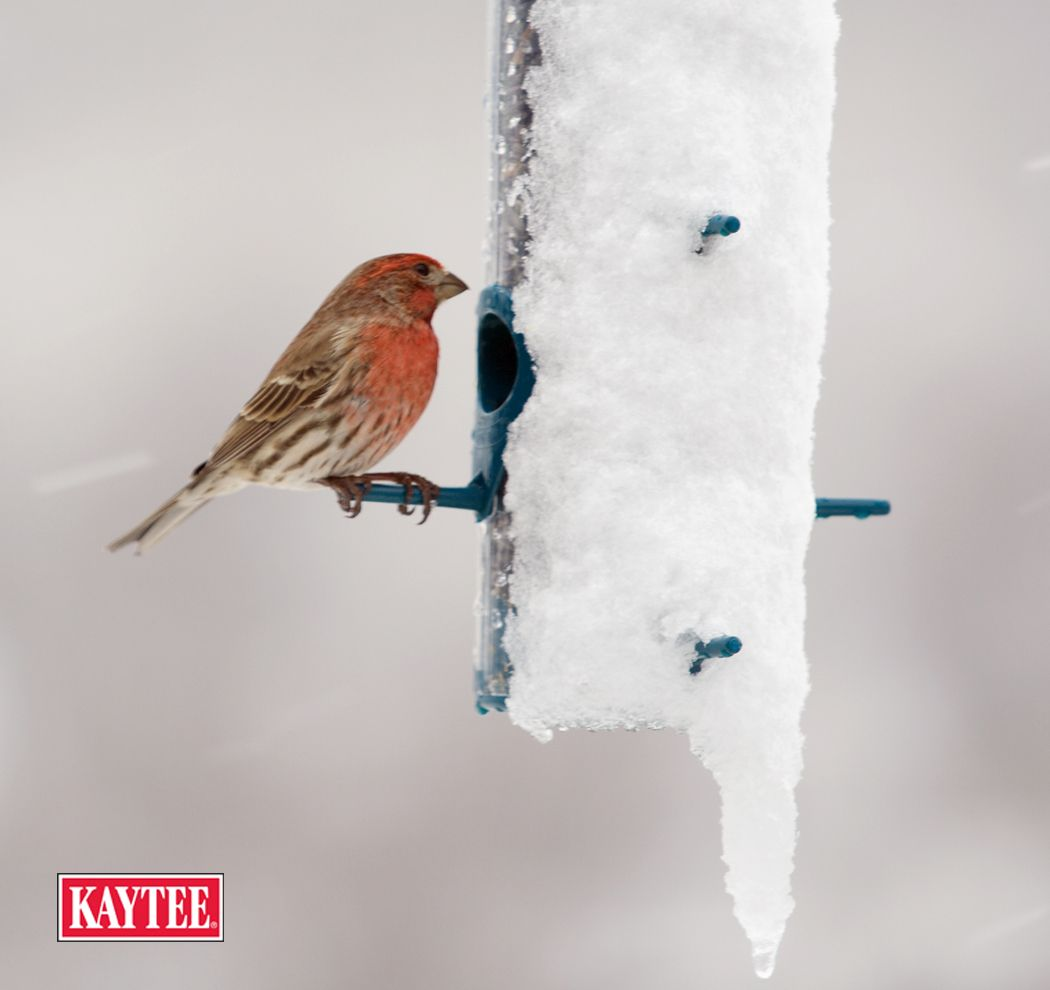 some say that winter is the best time to attract backyard birds
