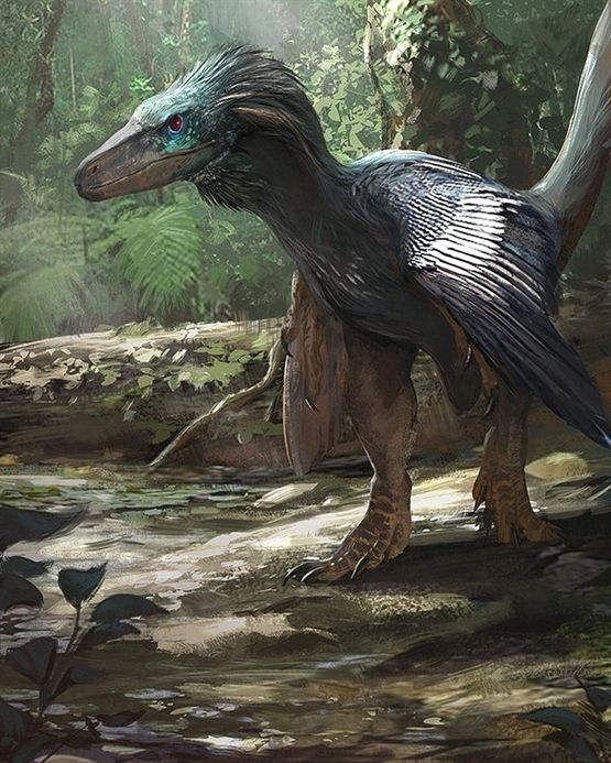 "Dinosaur on Instagram: ""Balaur bondoc (stocky dragon), which is now classified as a bird, by Jonathan Kuo. * FOLLOW"