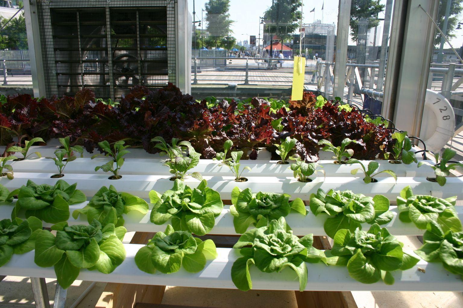 Hydroponics Supplies Vegetable garden for beginners