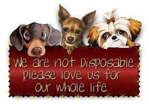 Animals Are Not Disposable When It Is No Longer Convenient For You