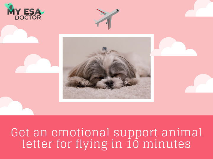 Get an emotional support animal letter for flying in 10
