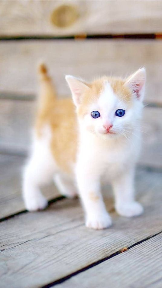 Cute Animals To Draw Pictures while Kittens For Sale