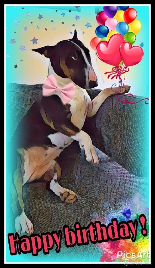 check out what i made with tap the pin for the most adorable pawtastic fur baby apparel you ll love the dog clothes and cat clothes