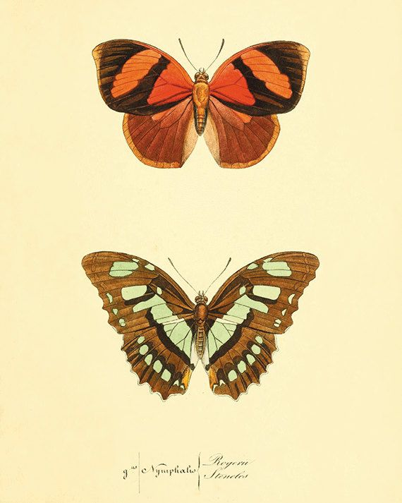 Orange Butterfly art print poster antique prints Nature print ...
