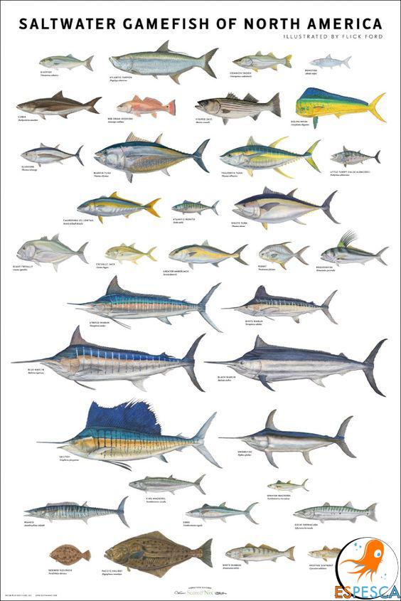 Infografías de peces 26   Peces   Pinterest   Pesca, Fotos de peces ...