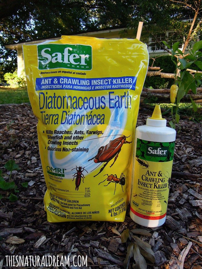 diatomaceous earth uses in the garden Diatomaceous earth