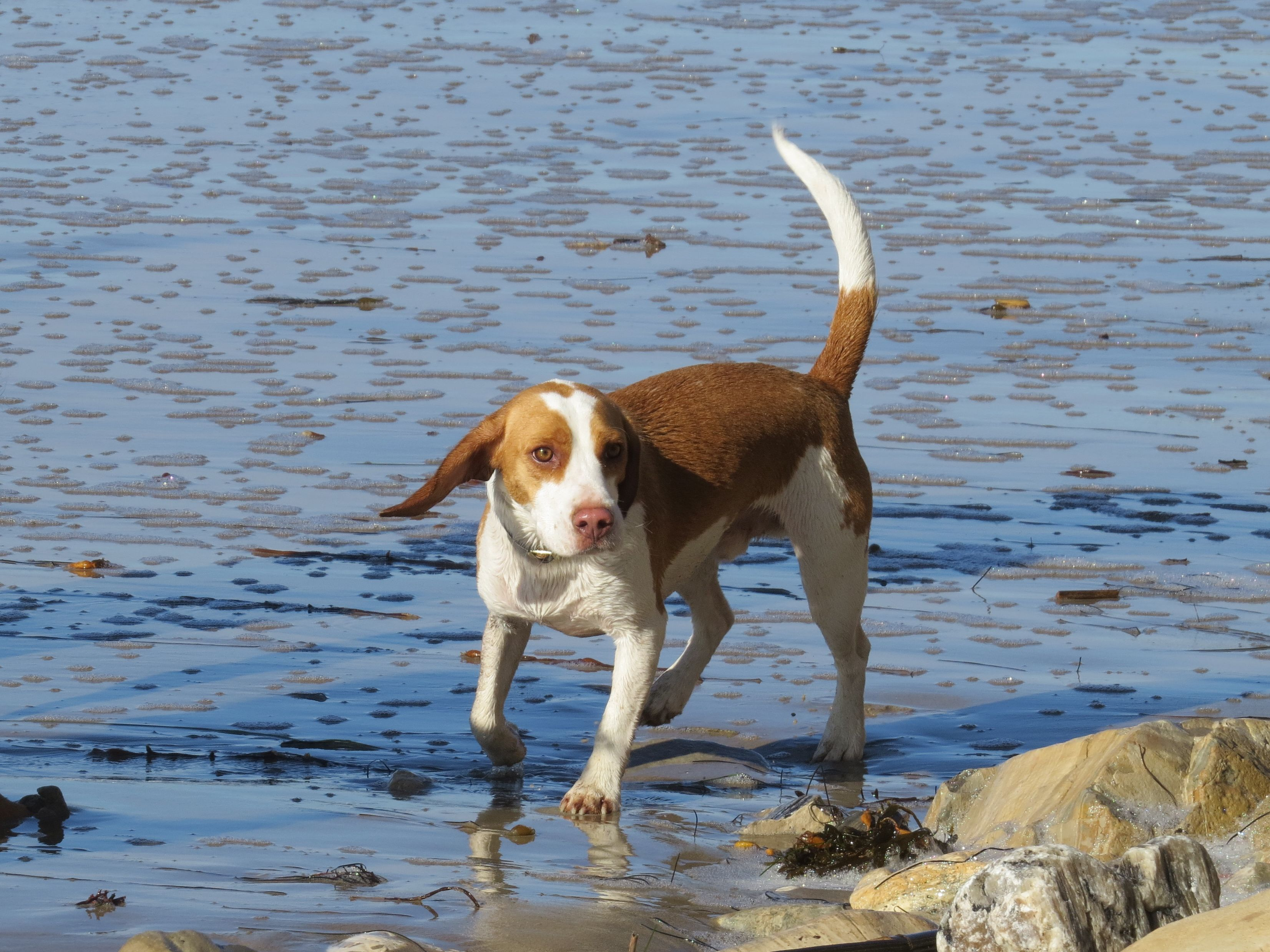 FavoritePlace LemonBeagle MisterBuddyBeagle Beagle