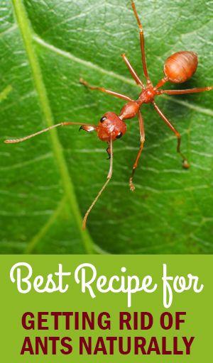How To Get Rid Of Ants In Garden Patio