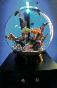 Biorb setup ideas & Biorb setup ideas | ?????????? | Pinterest | Fish tanks Aquariums ...