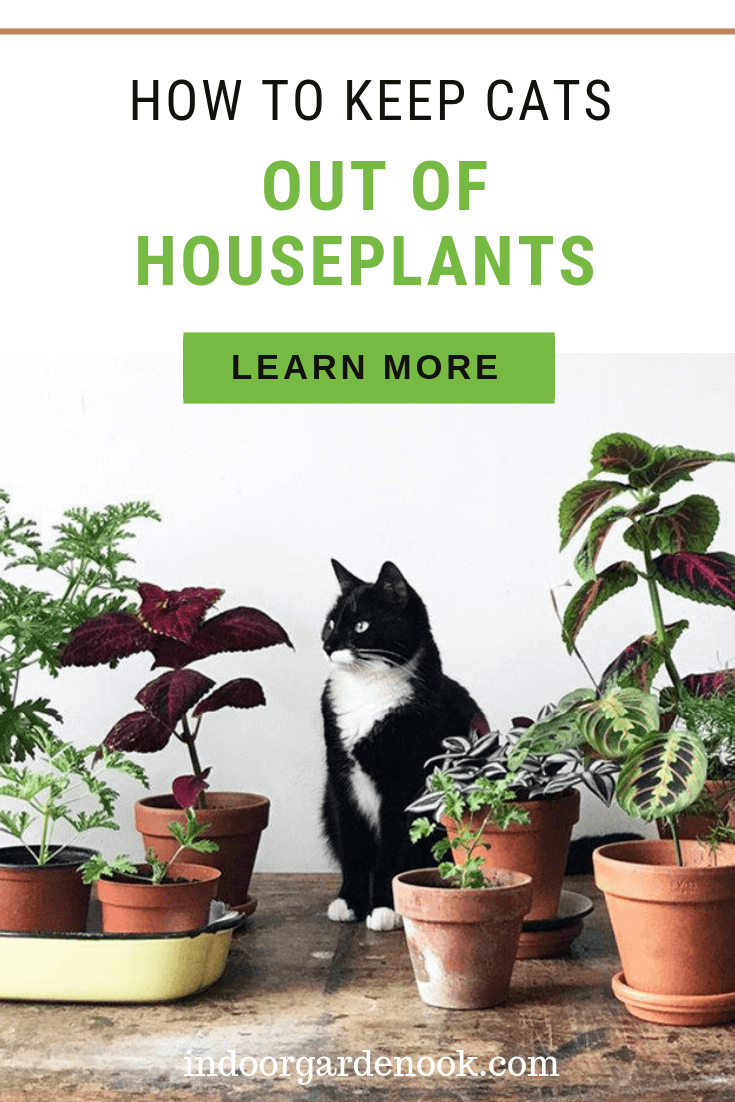 How To Keep Cats Out Of Houseplants Indoor Garden Nook Cat Plants Potted Plants Outdoor Houseplants