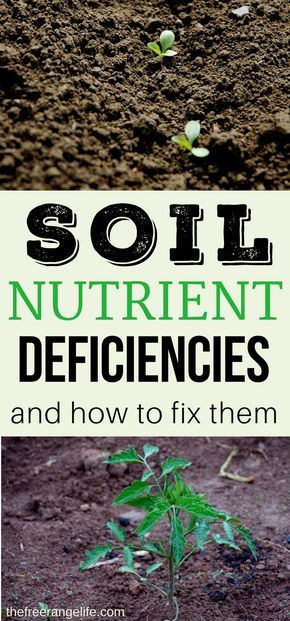 Soil improvement is a never ending job for the organic gardener. Learn how to spot common soil nutrient deficiencies and how to fix them. Includes a easy to follow chart!