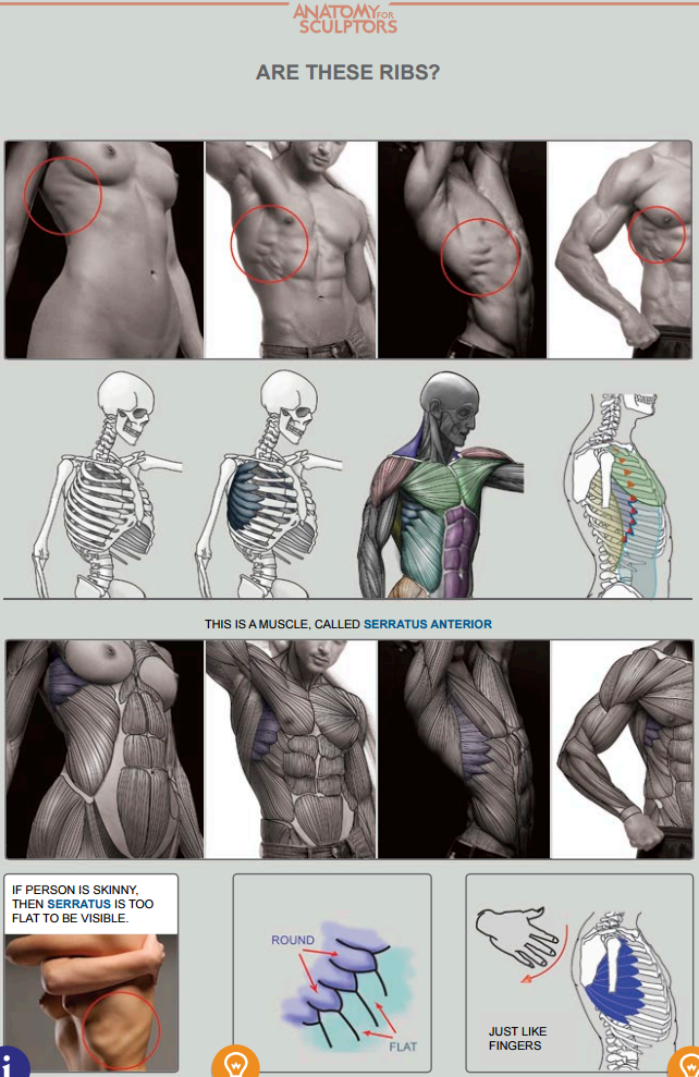 Pin de Simonova Arina en drawing tutorials | Pinterest | Anatomía ...
