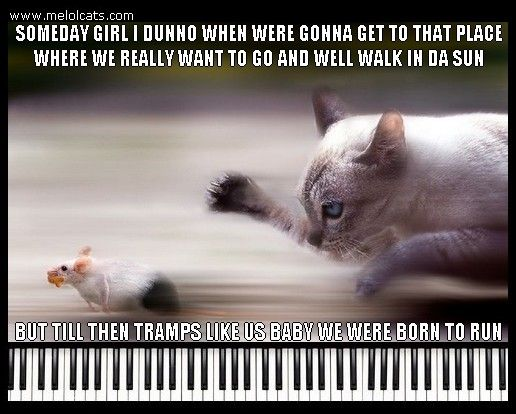 LOLcat runs after mouse, LOLcat loves Bruce Springsteen