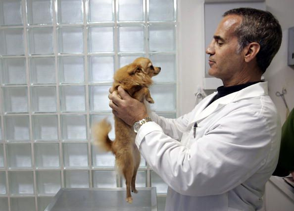 How Do I Find The Best Vet Near Me Vet Clinics Vets Animal Medicine