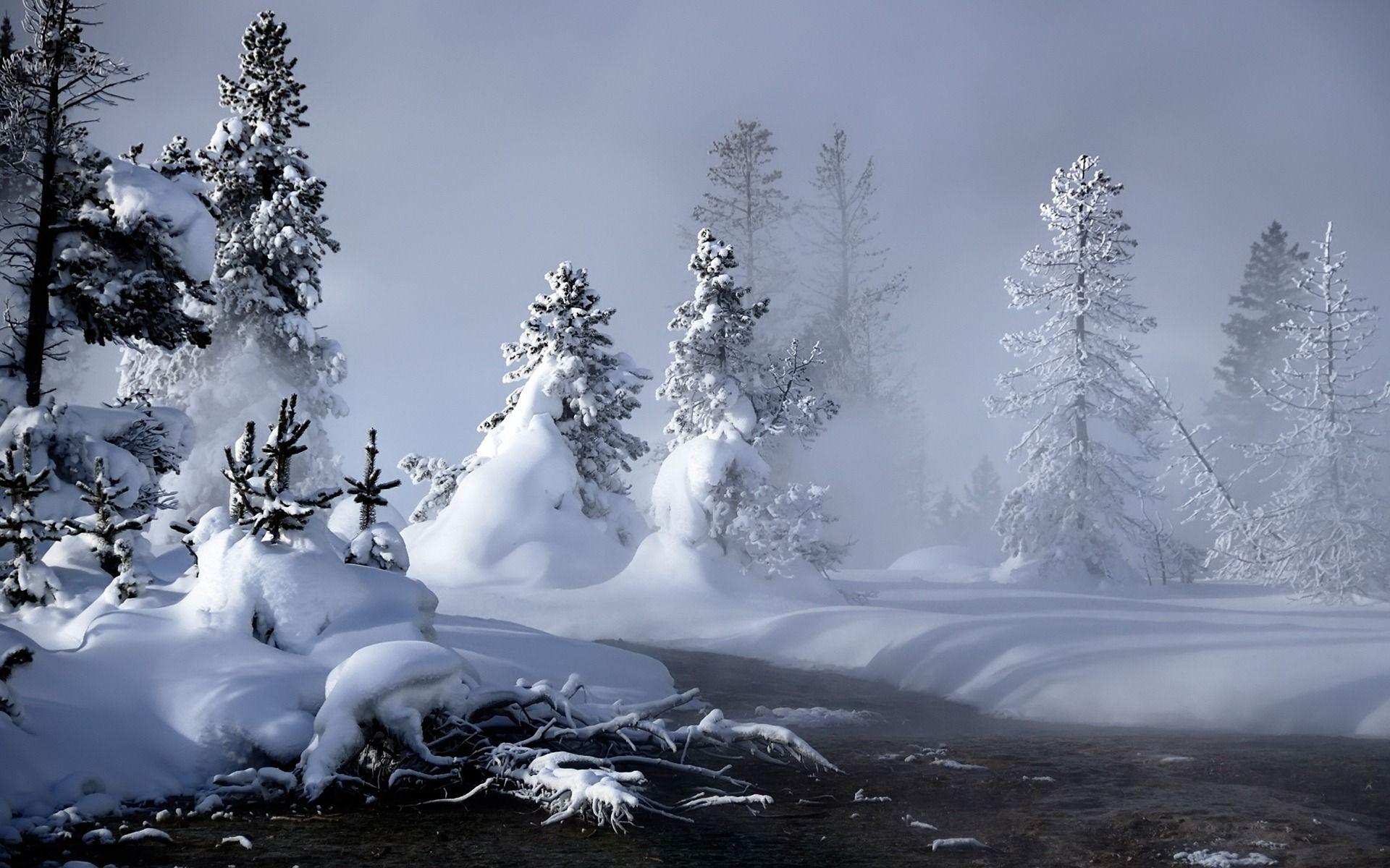 Mystic Winter Trees Wallpaper Hd Wallpaper Iphone