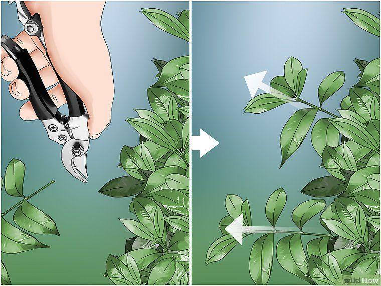 Prune A Gardenia Bush In 2020 Gardenia Bush Gardenia Plant
