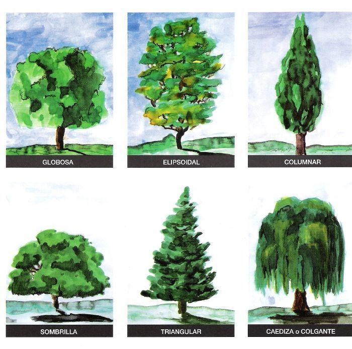 Resultado de imagen de tipos de arboles y sus nombres for Arboles de hoja perenne con sus nombres