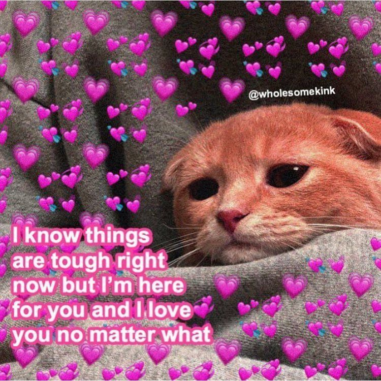 Y All I M Sorry For Being Inactive I Ll Try To Get More Posts In Uwu Purememes Wholesomememes Ilovey Love Memes Funny Love You Meme Cute Couple Memes