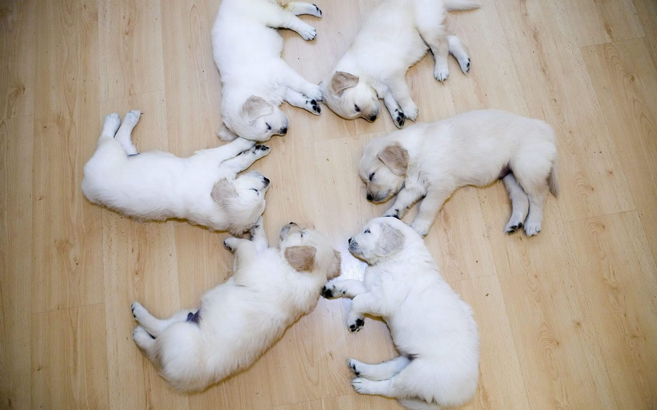 Sleeping pup cute too cute pinterest animal dog and pup