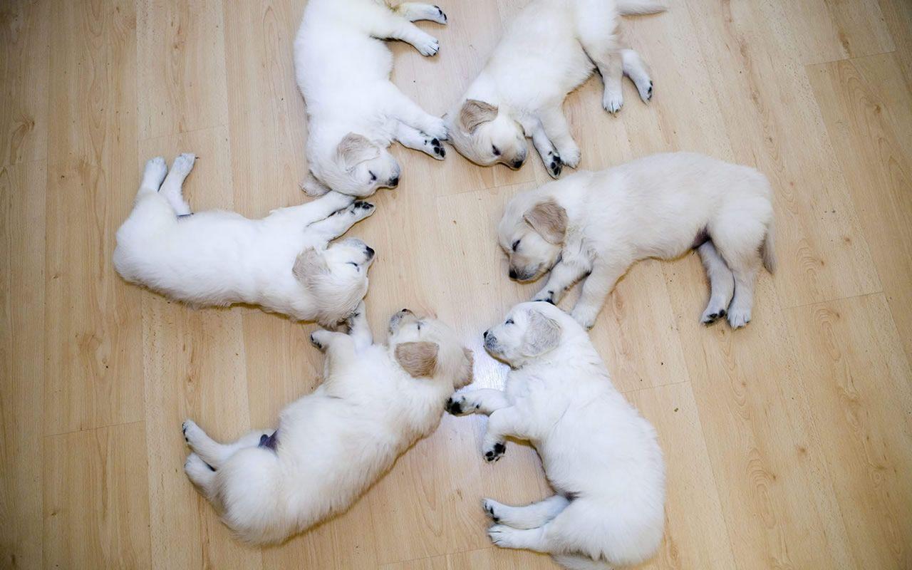 Sleeping Puppies Cute Puppy Wallpaper Cute Animal Photos Cute