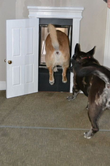 DIY Pets: Fancy Schmancy Dog Door | The DIY Adventures - upcycling recycling and : dogy door - Pezcame.Com