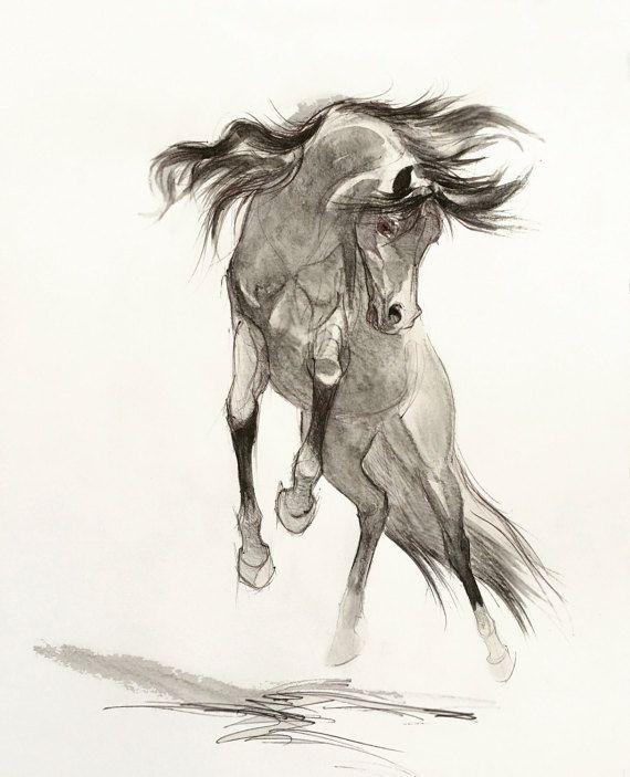 Pencil Horse Drawing Giclee, Arabian Horse Drawing, Drawing Print ...