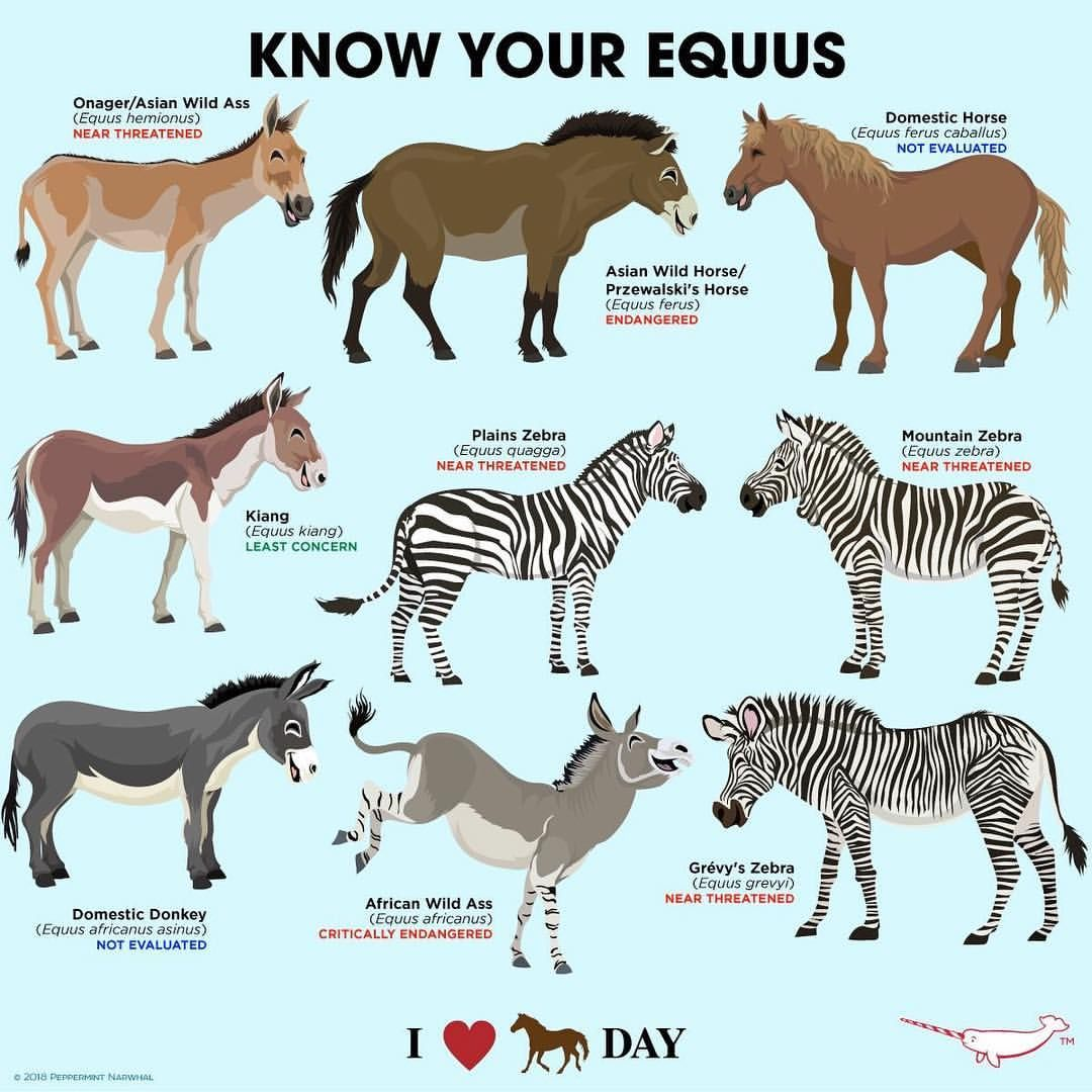 I Love Horses Day Is July 15! #horses #knowyouequus