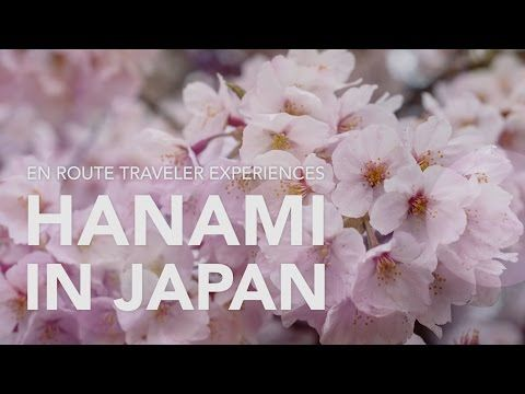 Hanami: Celebrating Japan's Cherry Blossoms - #Tokyo #Travel