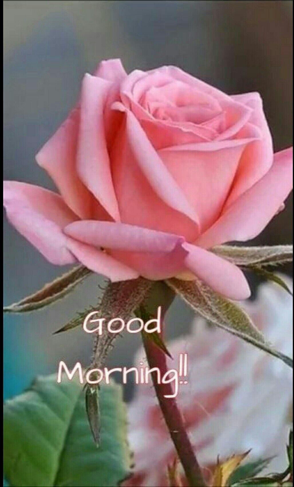 Pin by ann on pinterest morning images pin by ann on pinterest morning images morning greetings quotes and morning qoutes izmirmasajfo