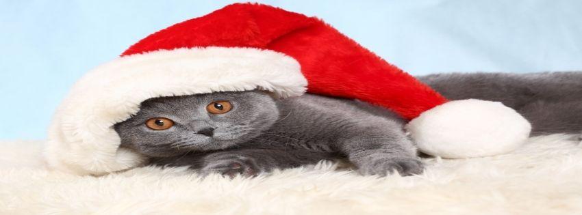 cat Santa Facebook Timeline Cover http://tararadam.com/fbcovers