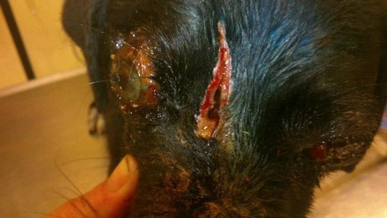 Justice for Ionas | Please sign and share the petition asking the Mayor of Samothraki to do everything in his power for the dog's abuser to be found and brought to justice.