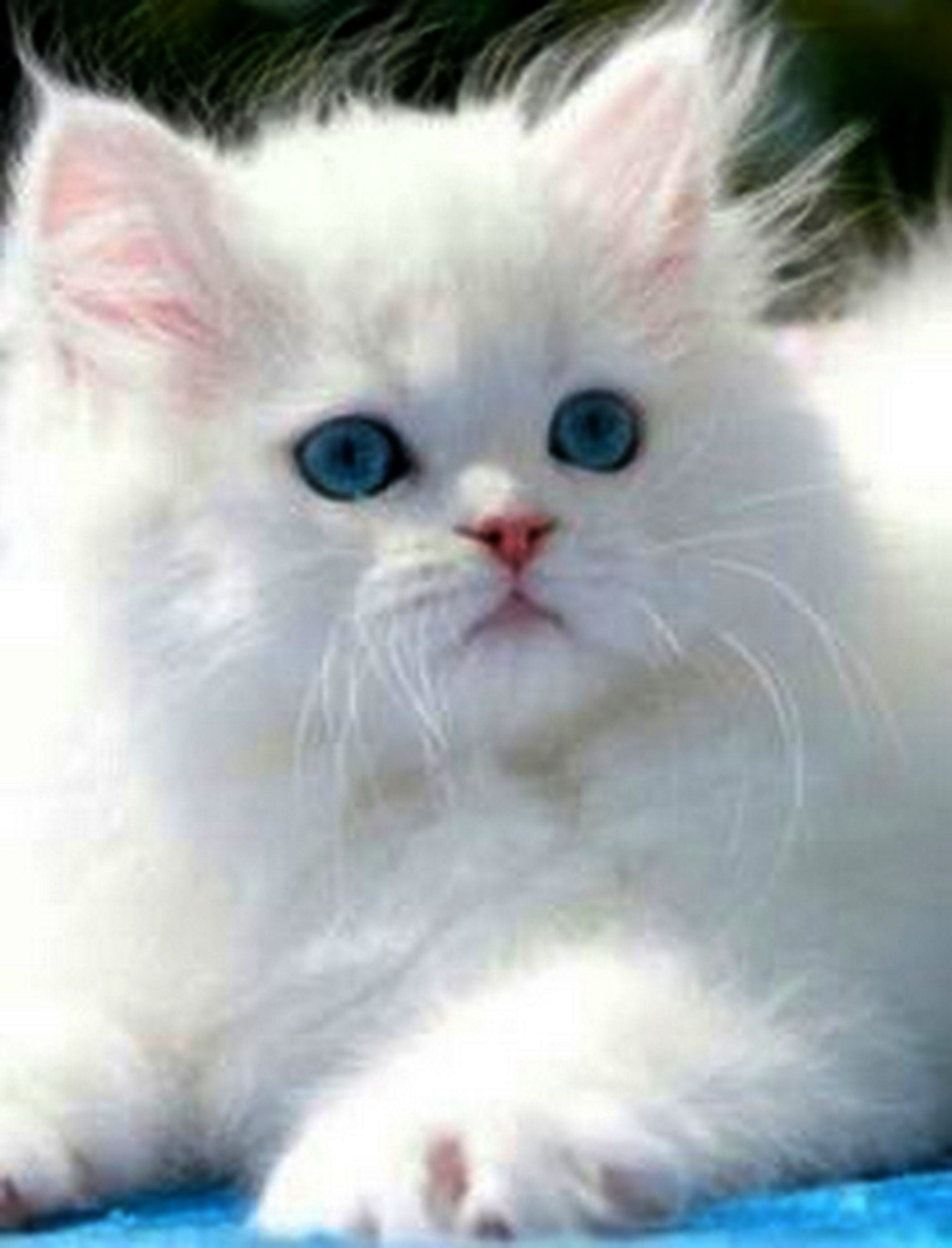 Check Out What I Gotvery Beautiful Cats Images Twitter