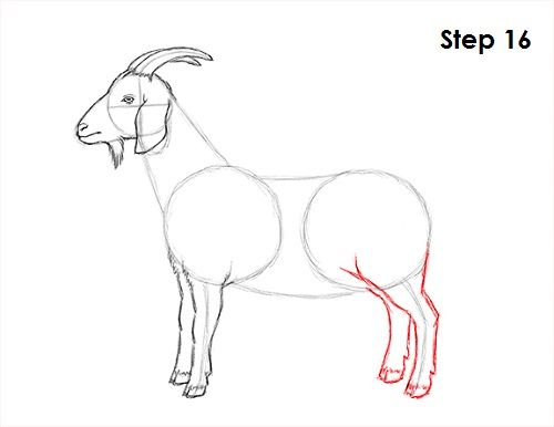67039c7b0e51ab44010454a6c5df455a » Simple Goat Drawing