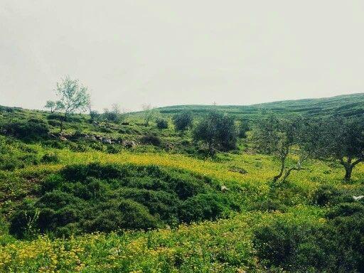 صور فصل الربيع في عصيرة القبلية نابلس فلسطين Outdoor Palestine Farmland