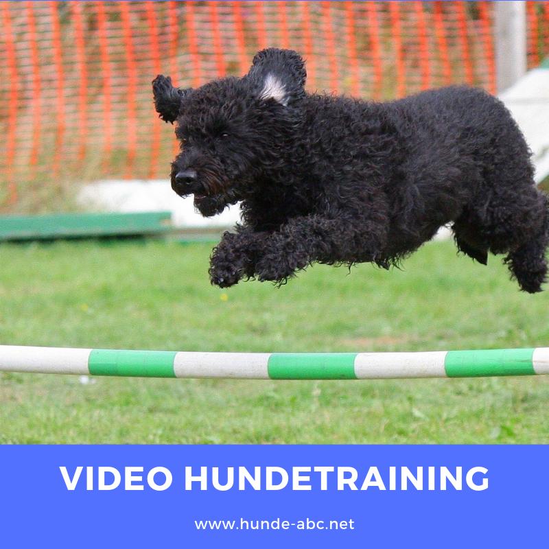 Professionelles Online Hundetraining Mit Bildern Hundchen