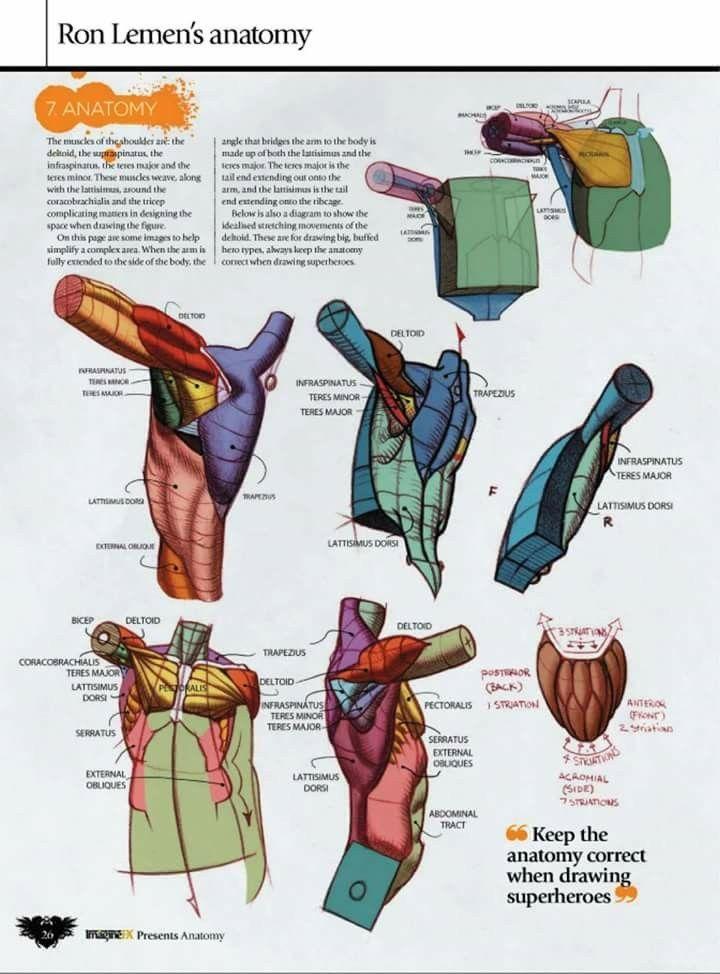 Pin de Simon en Art | Pinterest | Anatomía, Anatomía humana y Dibujo ...