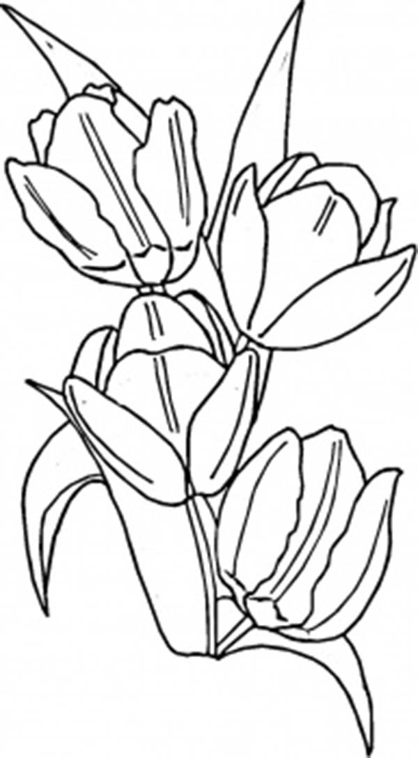 A Blooming Peony Tulips In Netherland Coloring Page : Kids ...