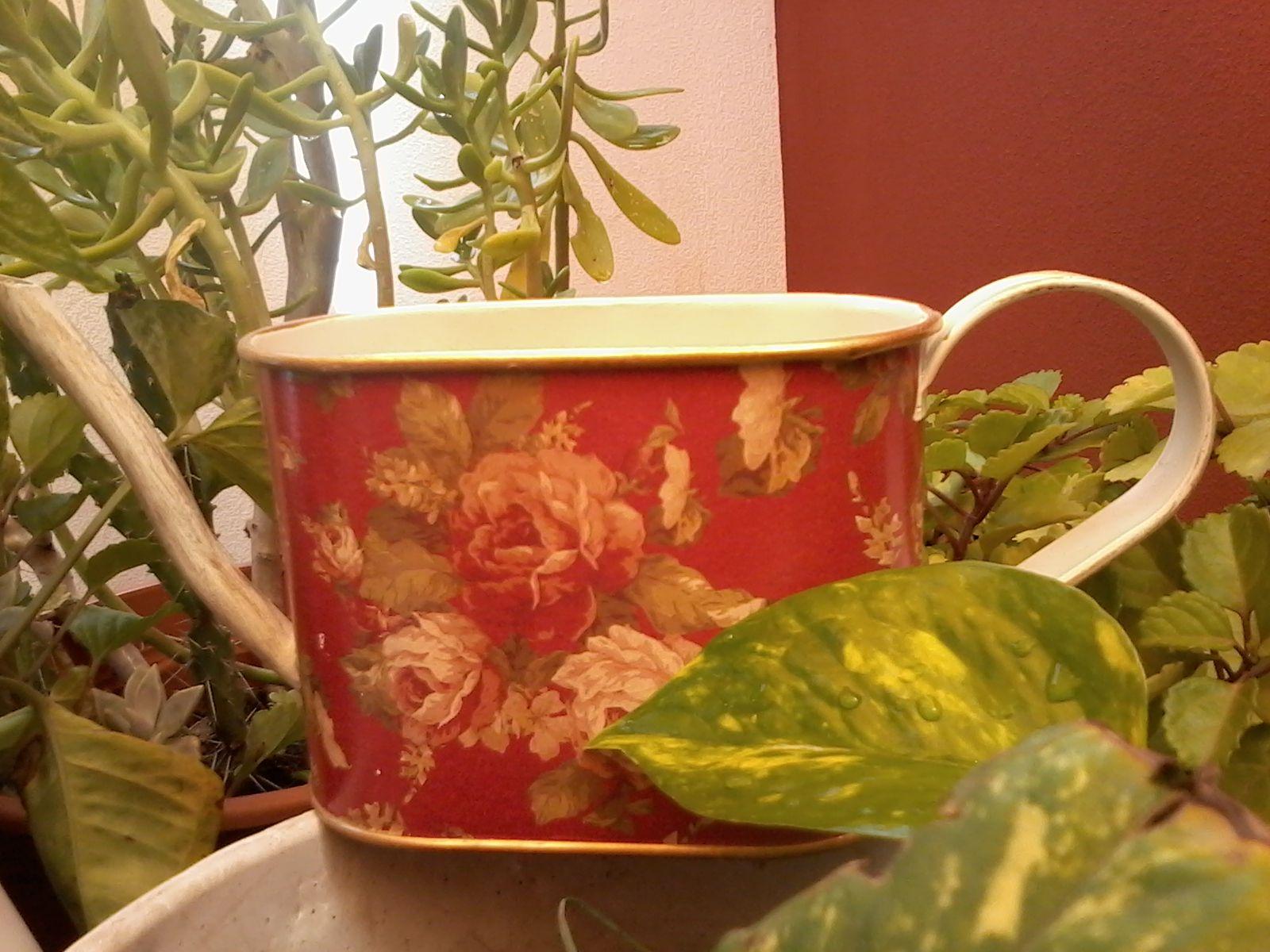 regadera plantas