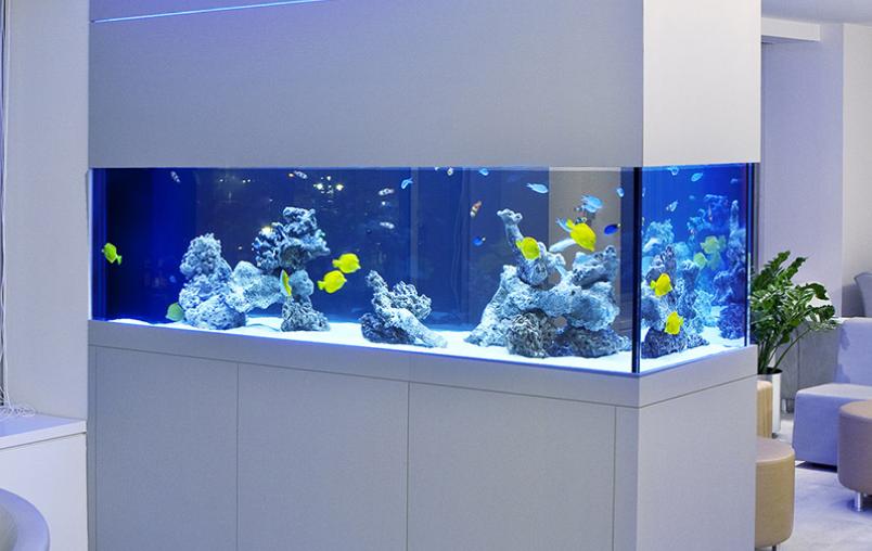 Elegant Aquarium By Okeanos Aquascaping
