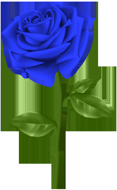 Blue Rose Transparent Png Clip Art Gallery Yopriceville High Quality Images And Transparent Png Fre Rose Flower Png Flower Background Images Flower Images