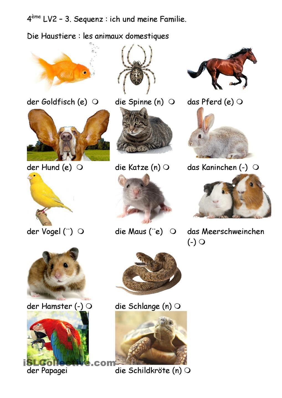 Haustiere raten | Deutsch lernen | Pinterest