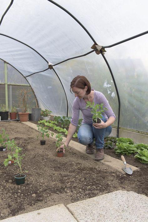 so setzen sie ihre tomatenpflanzen richtig garten. Black Bedroom Furniture Sets. Home Design Ideas